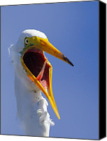 Great Egret Canvas Prints - Are You Serious Canvas Print by Andrew McInnes