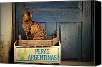Door Pyrography Canvas Prints - Argentine pears Hungarian cat Canvas Print by Julianna Horvath