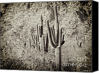 Sky Canvas Prints - Arizona Desert 2 Canvas Print by Methune Hively