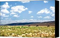 (c) 2010 Canvas Prints - Arizona Desert Horses Canvas Print by Ryan Kelly