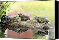 Bullfrogs Canvas Prints - Army Amphibian Canvas Print by Katherine White