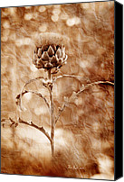 Floral Special Promotions - Artichoke Bloom Canvas Print by La Rae  Roberts