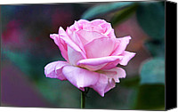 Leaves Pyrography Canvas Prints - Artistic Pink Rose Canvas Print by Linda Phelps