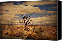 Joshua Trees Canvas Prints - As We Go Down Lifes Lonesome Highway Canvas Print by Laurie Search