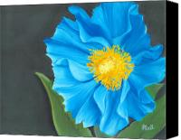 Poppy Drawings Canvas Prints - Asian Blue Canvas Print by Laura Bell