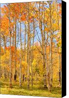 James Insogna Canvas Prints - Aspen Fall Foliage Vertical Image Canvas Print by James Bo Insogna