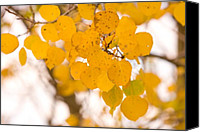 "\""striking Photography\\\"" Canvas Prints - Aspen Leaves Canvas Print by James Bo Insogna"