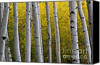 Locket Canvas Prints - Aspen Light 3 Canvas Print by Dave Dilli