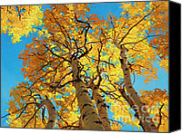 Fall Leaves Canvas Prints - Aspen Sky High 2 Canvas Print by Gary Kim