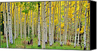 Aspen Trees Canvas Prints - Aspen Slope Canvas Print by Ellen Lacey