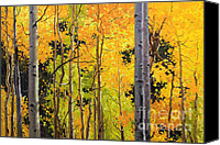 Fall Leaves Canvas Prints - Aspen Trees Canvas Print by Gary Kim