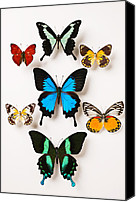 Colors Photo Canvas Prints - Assorted butterflies Canvas Print by Garry Gay