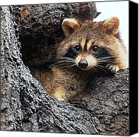Raccoon Digital Art Canvas Prints - At Home Canvas Print by Fred Zilch