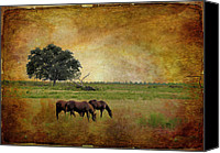 Country Scenes Canvas Prints - At Pasture Canvas Print by Jan Amiss Photography