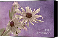 Floral Canvas Prints - Attachement - s09at01b2 Canvas Print by Variance Collections