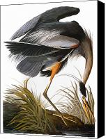 Flk Canvas Prints - Audubon: Heron Canvas Print by Granger