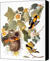 Flk Canvas Prints - Audubon: Oriole Canvas Print by Granger