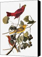 Flk Canvas Prints - Audubon: Tanager Canvas Print by Granger