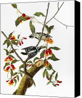 Downy Canvas Prints - Audubon: Woodpecker, 1827 Canvas Print by Granger
