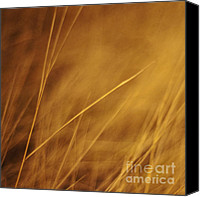 Yellow Photo Canvas Prints - Aurum Canvas Print by Priska Wettstein
