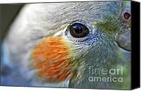 Australian Animal Canvas Prints - Australian Birds - Eye of the Cockateil Canvas Print by Kaye Menner