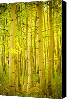 Autumn Photographs Canvas Prints - Autumn Aspens Vertical Image  Canvas Print by James Bo Insogna