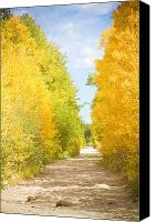 Autumn Photographs Canvas Prints - Autumn Back County Road Canvas Print by James Bo Insogna