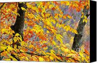 Mountain Stream Canvas Prints - Autumn Beech Leaves  Canvas Print by Thomas R Fletcher