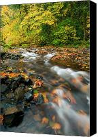 Autumn Leaves Canvas Prints - Autumn Beneath Canvas Print by Mike  Dawson