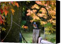Hovind Canvas Prints - Autumn Blue Bird Canvas Print by Scott Hovind
