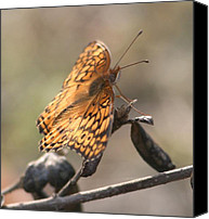 Insects Pyrography Canvas Prints - Autumn Butterfly Canvas Print by Valia Bradshaw