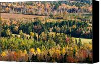 Matt Dobson Canvas Prints - Autumn Colors on the Bonshaw Hills Canvas Print by Matt Dobson