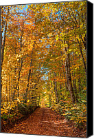 Matt Dobson Canvas Prints - Autumn Country Road Canvas Print by Matt Dobson