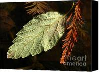 Fall Foliage Artwork Canvas Prints - Autumn Departure Canvas Print by Juergen Roth