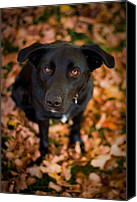 Autumn Leaves Canvas Prints - Autumn Dog Canvas Print by Adam Romanowicz