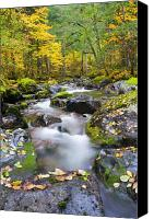 Forest Canvas Prints - Autumn Flow Canvas Print by Mike  Dawson