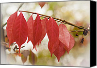 Fall Photo Special Promotions - Autumn Foliage in Macro Canvas Print by Jiayin Ma