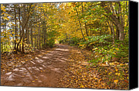 Matt Dobson Canvas Prints - Autumn Foliage On A Country Road Canvas Print by Matt Dobson