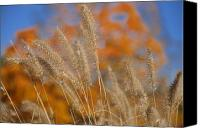 Foxtail Canvas Prints - Autumn Foxtail - Multiple Canvas Print by Frank Mari