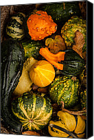 Matt Dobson Canvas Prints - Autumn Gourds Collage Canvas Print by Matt Dobson