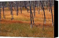 Yellowstone Park Canvas Prints - Autumn Grasses in Yellowstone Canvas Print by Bruce Gourley