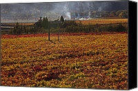 Napa Valley Canvas Prints - Autumn In Napa Valley Canvas Print by Garry Gay