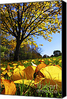 Forest Floor Canvas Prints - Autumn landscape Canvas Print by Elena Elisseeva