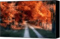 Colors Photo Canvas Prints - Autumn Lane Canvas Print by Tom Mc Nemar