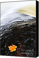 Brook Canvas Prints - Autumn leaf on river rock Canvas Print by Elena Elisseeva