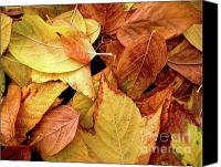 Winter Canvas Prints - Autumn leaves Canvas Print by Carlos Caetano