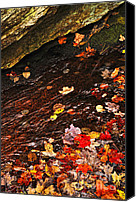 Brook Canvas Prints - Autumn leaves in river Canvas Print by Elena Elisseeva