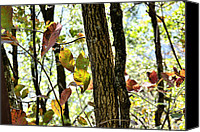 Autumn Scenes Canvas Prints - Autumn Leaves Canvas Print by Larry Bishop