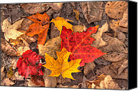 Leaf Pile Photo Canvas Prints - Autumn Leaves Canvas Print by Matt Dobson