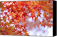 Growth Photo Canvas Prints - Autumn Leaves Canvas Print by Myu-myu